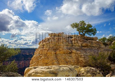 A lone juniper pine tree grows atop a rock formation at the top of the North Rim of the Grand Canyon off of Bright Angel Trail.