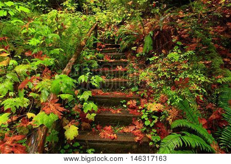 a picture of an exterior Pacific Northwest forest hiking trail wood staircase in fall
