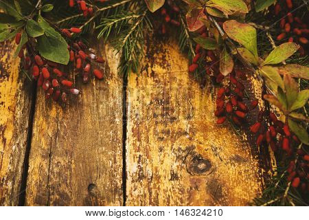 Autumn background. Composition with fir branches, branches with berries dogwood on a red shabby wooden background. Selective focus. Toned
