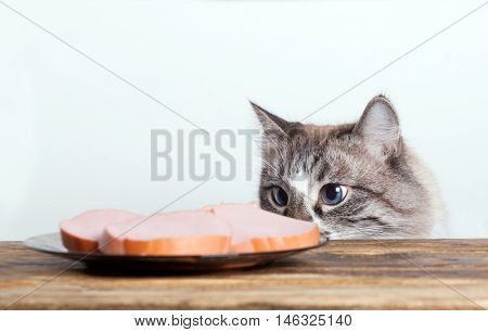 young cat near the a plate with sausage