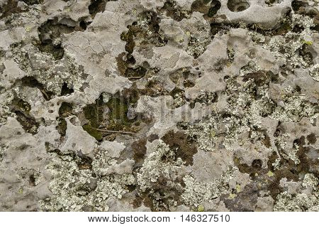 Sedimentary stone overgrown  with mossy and lichen  in Vitosha mountain, Bulgaria