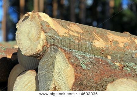Wooden Logs Stacked Detail