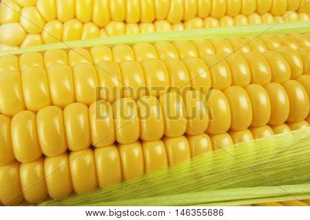 Grains of ripe corn. Background of corn cobs