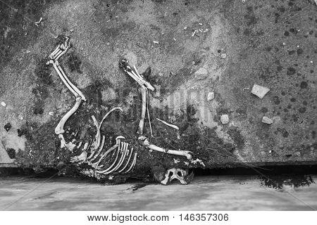 Carrion dead dry.The skeleton bone of dog