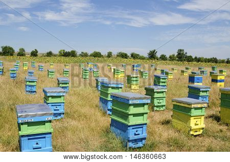 Beehives and sunflowers in a field in the countryside