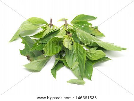 Basil herb non toxic for raw cooking