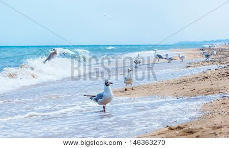 Gulls flying on the beach. Ocean waves and yellow sand