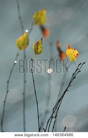 colored autumn leaves on the branches of trees