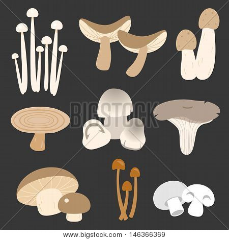 Vector eatable thai mushroom in flat style