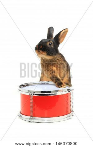 rabbit sitting on a drum isolated on white, studio shot