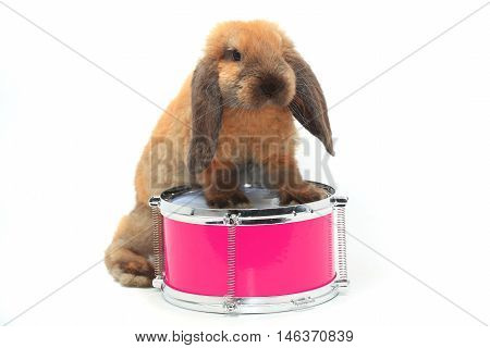 rabbit sitting on a pink drum isolated on white, studio shot