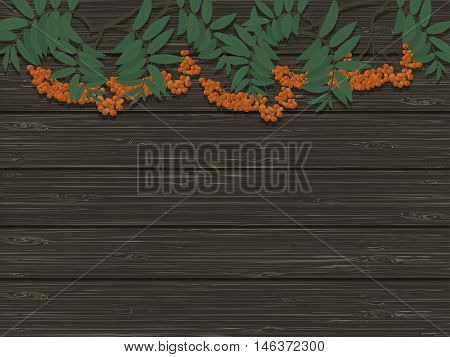 bunches of Rowan on the background of wooden texture
