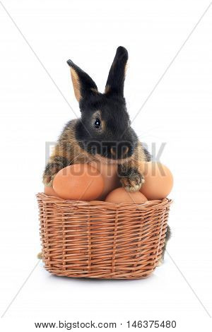 rabbit near a bucket with easter eggs