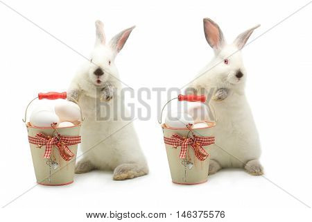 two white rabbits near a bucket with easter eggs