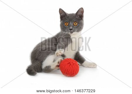 kitten with red yarn hank isolated on white background