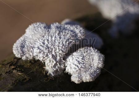 Lichen growing on a dead tree, macro shot