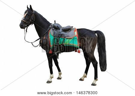 the a horse on a white background
