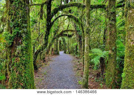 New Zealand Rain Forest In Westland National Park