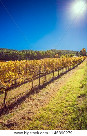 Winery during autumn season Adelaide Hills area South Australia