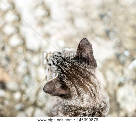 Head Of Cat For Background