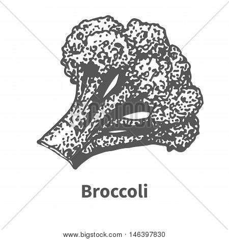 Vector illustration doodle black and white hand-drawn broccoli. Isolated on white background. The concept of harvesting. Vintage style.