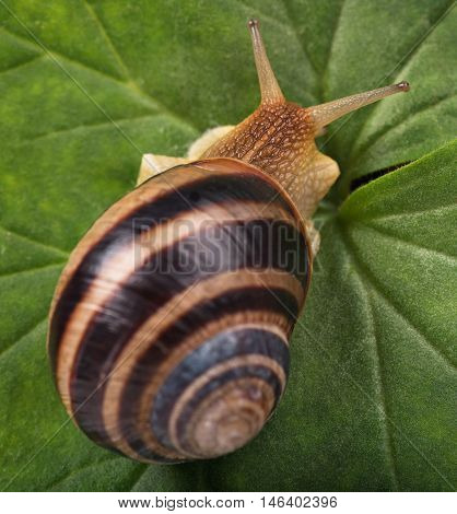 Bright cute snail over green leaf background close-up