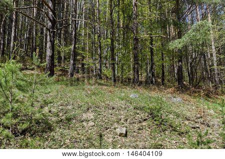 Vitosha mountain at springtime near to Sofia