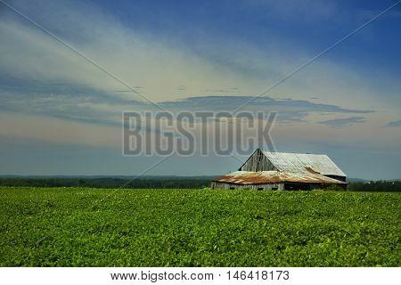 Little barn in a soybeans field