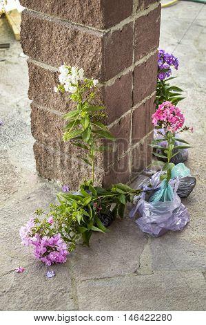 Saplings of flowers before landing to the soil