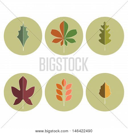 Vector icons of different trees leaves (holly chestnut oak marple ash and birch) in autumn colors. Flat design style.
