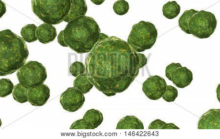 Bacteria virus render in green color isolated on white 3D render