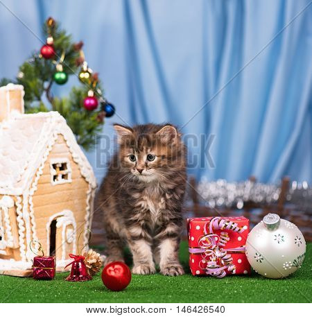 Cute kitten near gingerbread lodge with Christmas gifts and toys over blue background