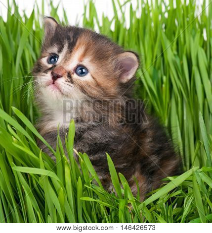 Cute little kitten in the bright green grass over grey background