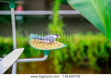 Dunedin, New Zealand - Febr 10, 2015: Bird Eating Seed From Bird Feeder In Larnach Castle Garden
