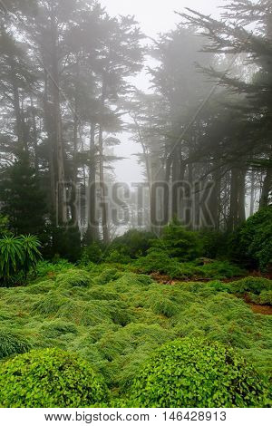 Foggy Morning In The Garden Of Larnach Castle, Dunedin.