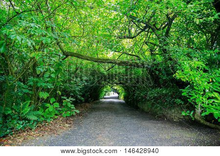 View Of Garden Trail Sinking In Green Mossy Trees And Bushes