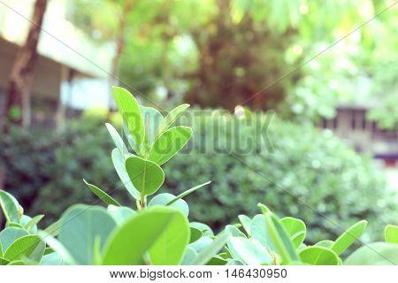Top leaves weakens, Plant, Macro, green plant