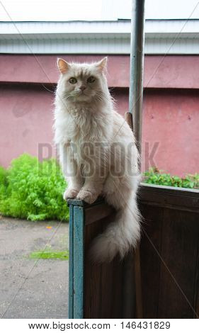 fluffy cat sitting on the porch. hiding from the rain