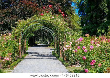 Rose Garden In Christchurch Botanic Garden, New Zealand.