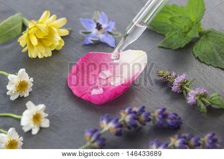 herbal medicine concep with dropper plant petal