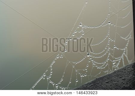 dewdrops create an unforgettable image on the web