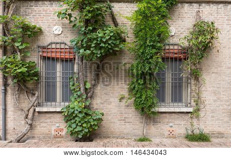 An Old House With Cilmbing Plants In A Garden In Italy