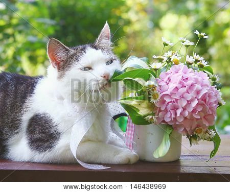 blue eyed cat chew hydrangea pink bouquet close up photo on the summer background