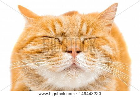 Proud ginger cat is lying isolated on white background
