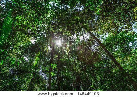 The Amazon Rainforest, Brazil