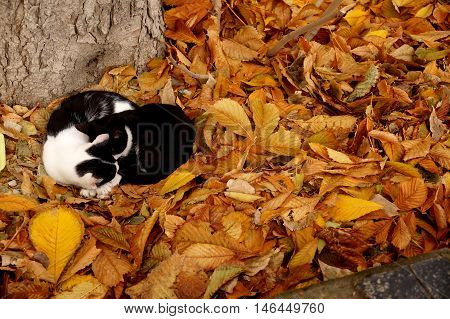Two cats on a carpet from autumn leaves