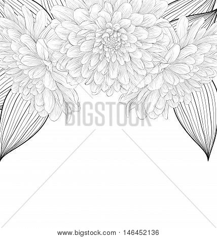 beautiful monochrome black and white background with frame of dahlia flowers. Hand-drawn contour lines and strokes.