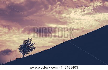 Silhouette Of A Lone Tree On A Hill Against A Sunset