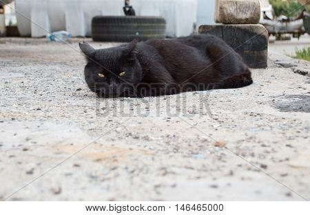 Resting Black Stray Cat With Yellow Eyes
