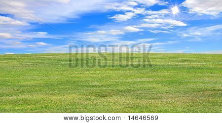 Landscape green field in the summer